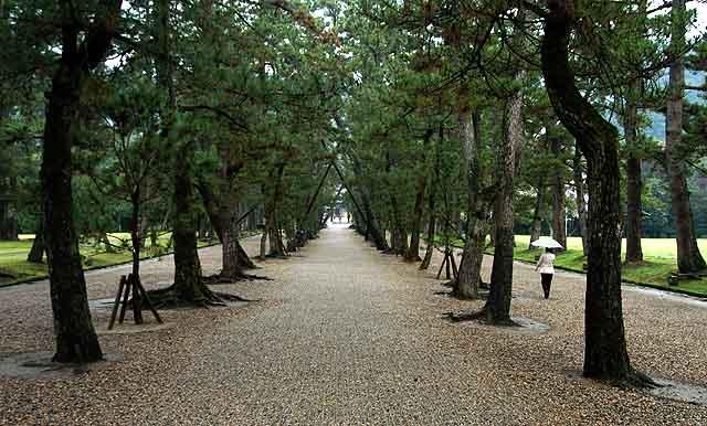 樹齢400年の松の参道